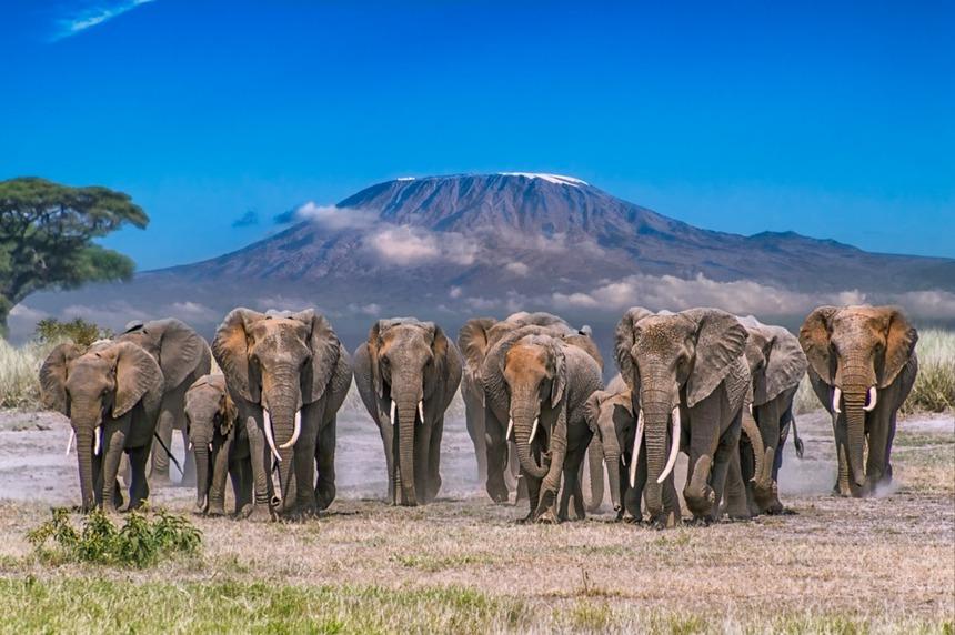 8天肯尼亚动物大迁徙深度奢华私人定制团